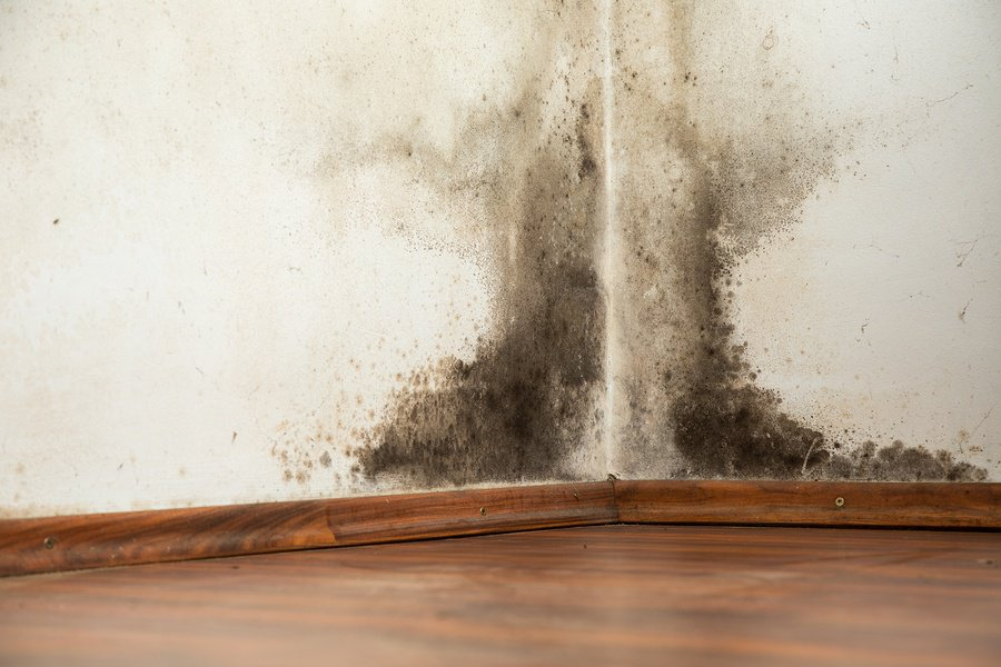 mold-growing-in-wall