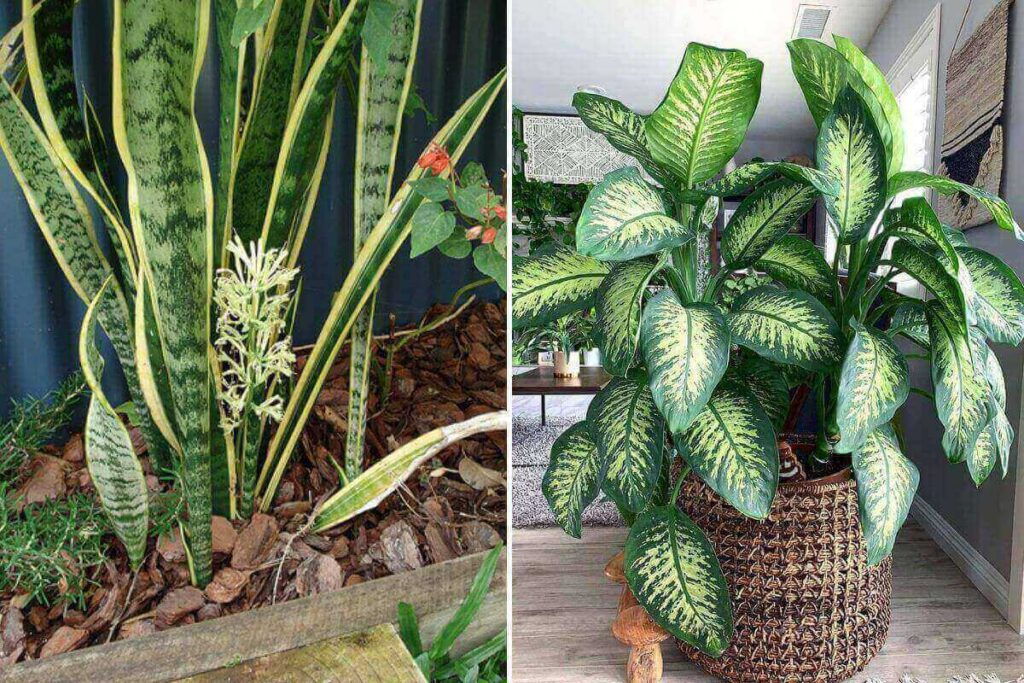 How-to-Keep-Outdoor-Plants-Alive-During-Winter