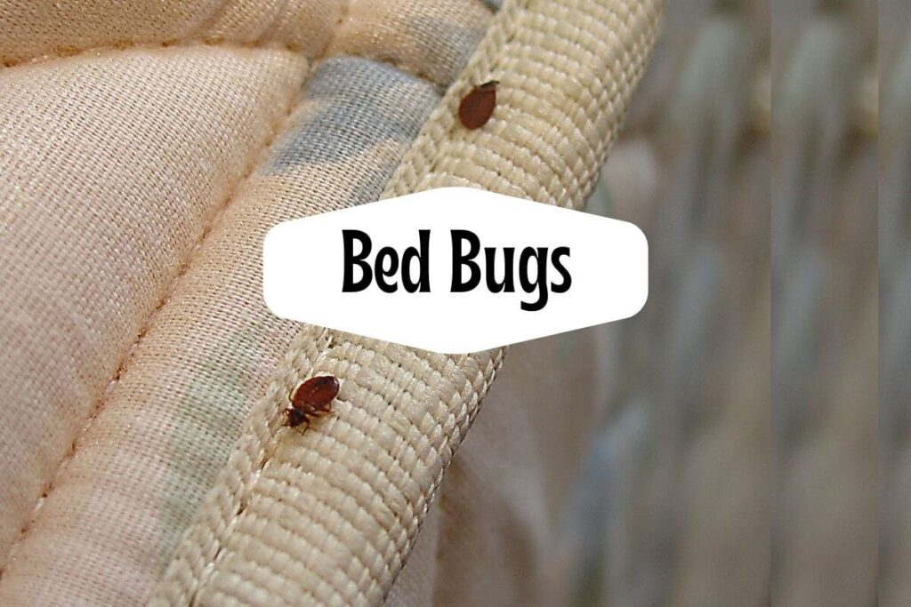What-Can-I-Put-On-My-Body-To-Prevent-Bed-Bug-Bites