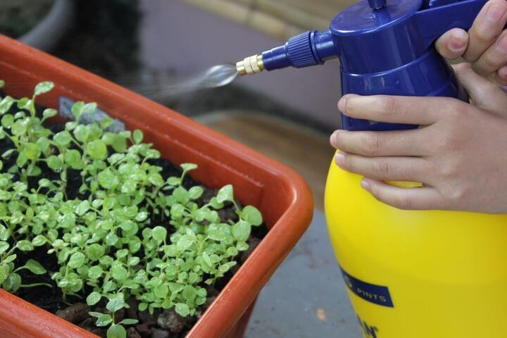 do-plants-need-water-iin-winter