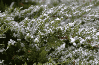 How to Keep Outdoor Plants Alive During Winter?