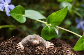 How to keep burrowing animals out of the garden?