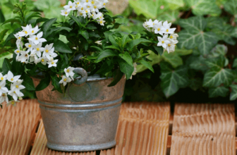 How to take care of jasmine plant indoor?